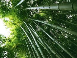 Propiedades Bambú